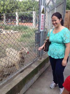 Feeding Baby White Tiger at Wild Animal Park